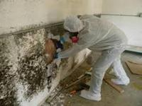 Mold Removal Service